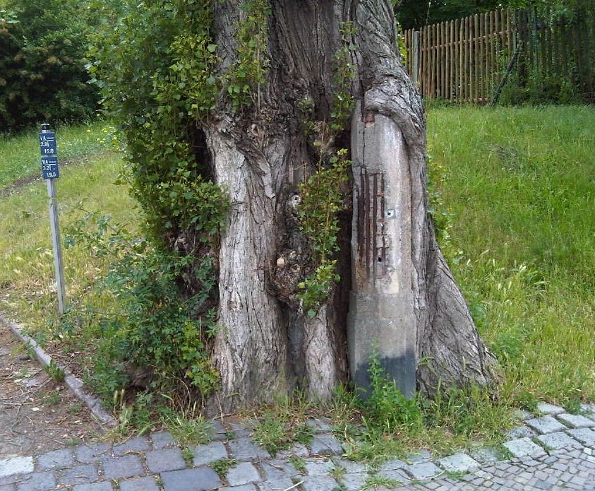 Stahl - Beton - Baum