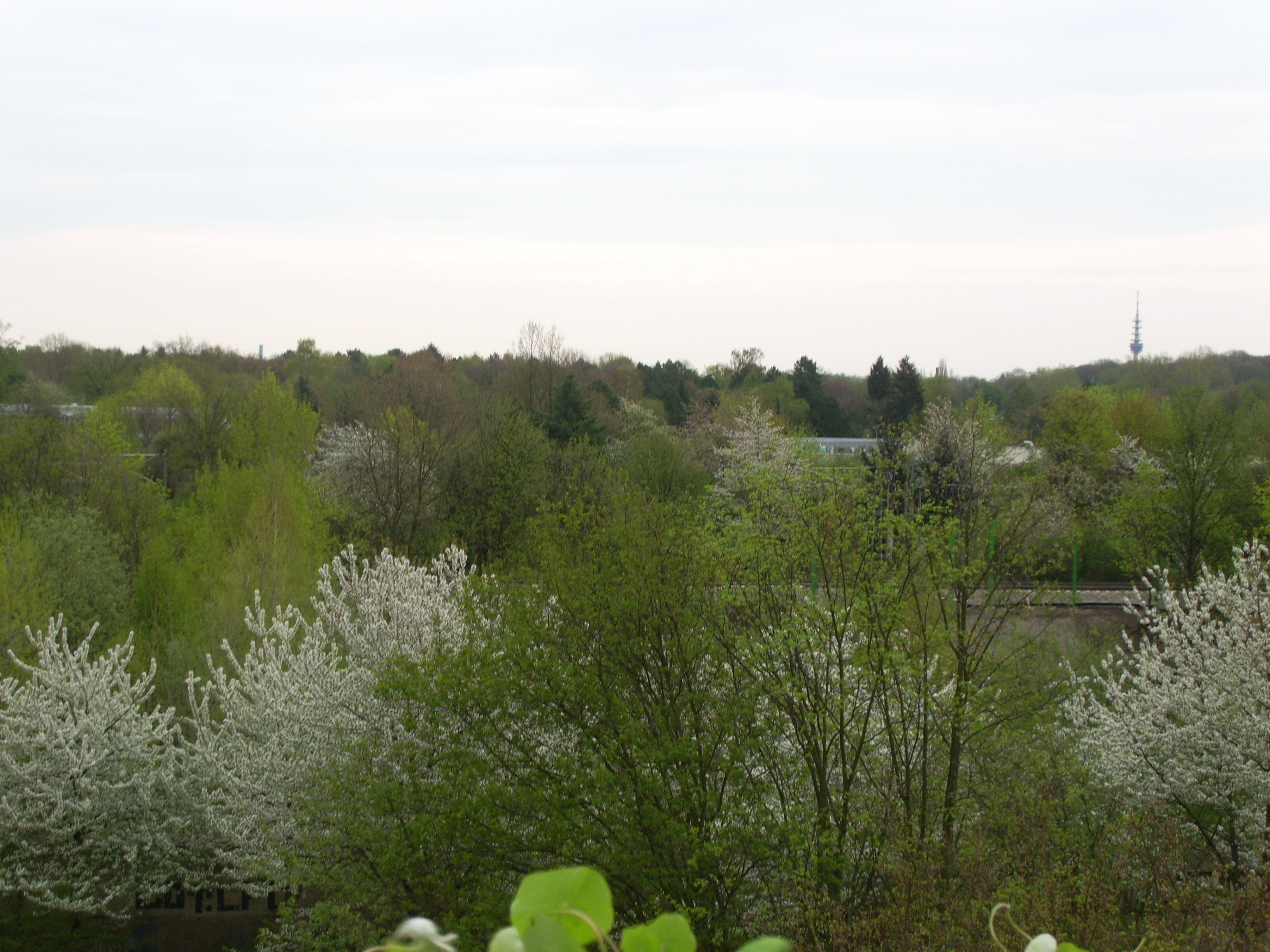 erstes Frühlingsgrün