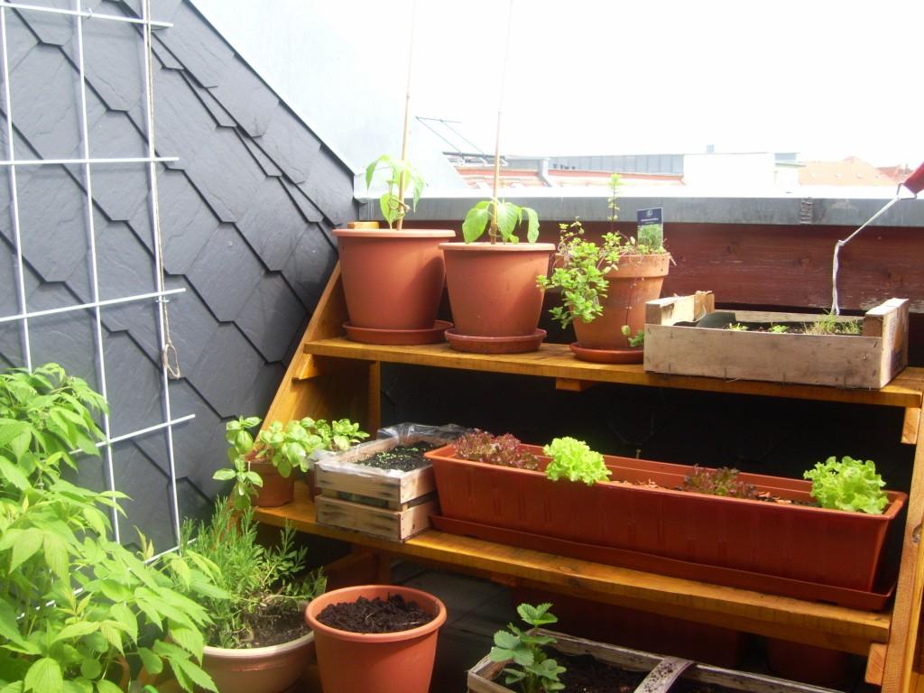 Genug Platz für Gemüse auf einer Pflanztreppe