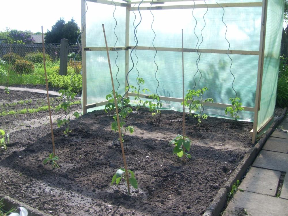 Tomaten im Zalt und Paprika