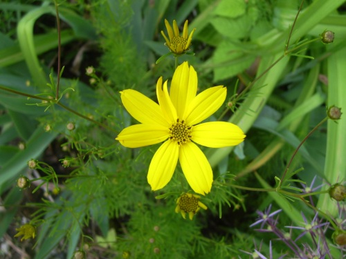 eine gelbe Blume