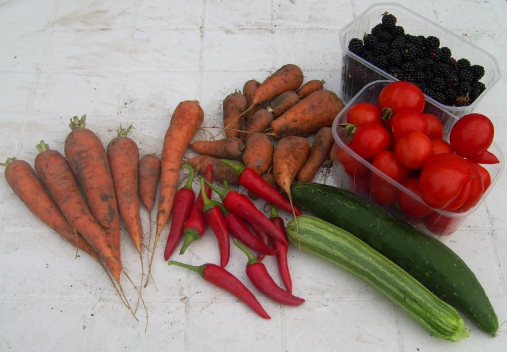 Ernte - Möhren, Tomaten, Chili, Gurke, Zucchini, Brombeeren