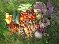 Gemüseernte2